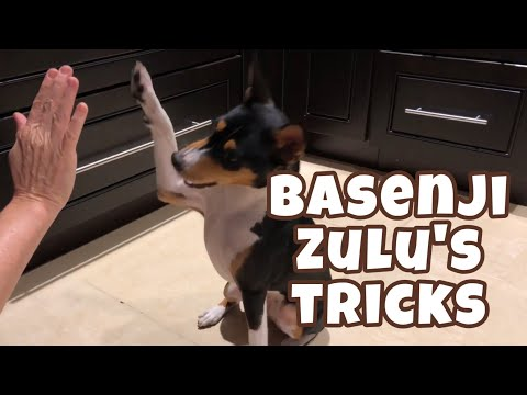 Zulu's tricks