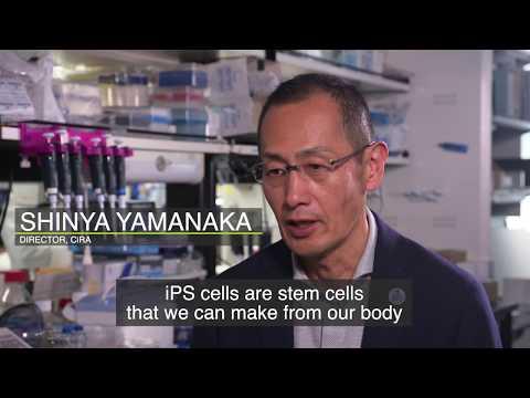 iPS Cells - Osaka/Kansai
