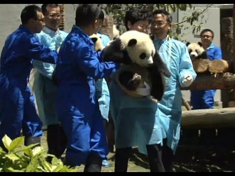 New Panda Center Opens in Southwest China