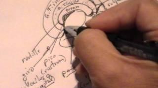 NEUROANATOMIA 2.0: HEMISFERIOS CEREBRALES; GIROS Y ÁREAS DE BRODMANN