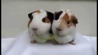 Hai chú chuột hamster không thể nào dễ thương hơn
