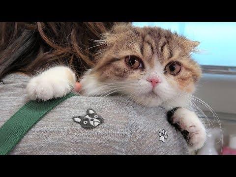 곰팡이 피부병 고양이 어떻게 케어 할까? [크림에스테틱]