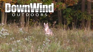 Coyote Hunting: Bad Gone Good (DownWind Outdoors)