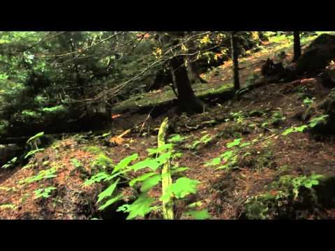FRONTIERSMAN Bear Spray Canada -- FRONTIERSMAN XTRA