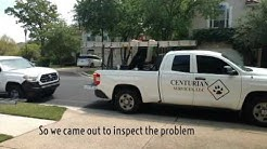 Animal Removal in Jacksonville 904-414-3001
