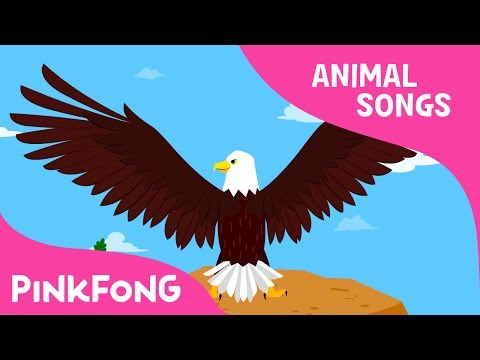 Powerful Bald Eagle | Eagle | Animal Songs | Pinkfong Songs for Children