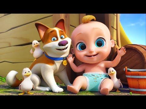 Sons de Animais - Canções Infantis Para Crianças | O Reino Infantil