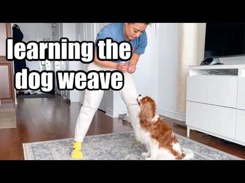 LEARNING THE DOG WEAVE AND BELATED WEDDING ANNIVERSARY // Canadian'Tine Day 6