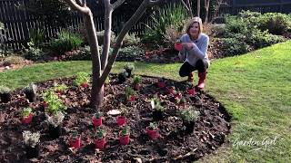 Garden Girl: My Bee-Friendly Garden Begins!...
