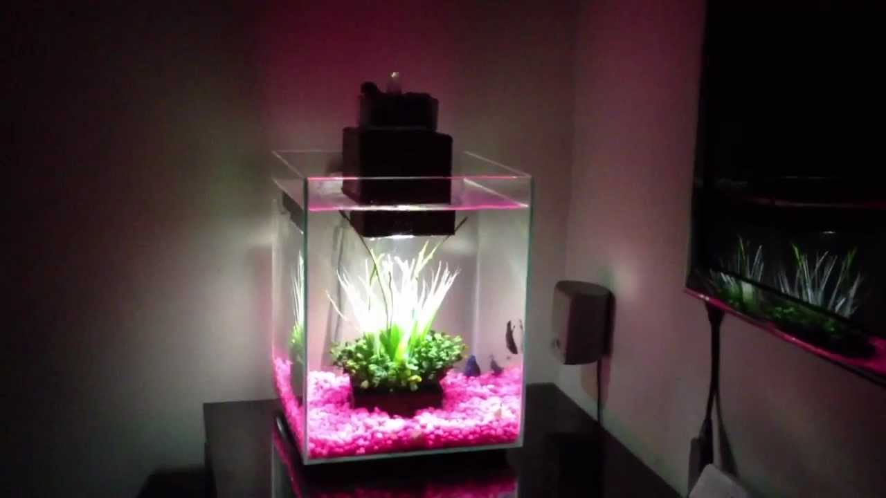 Fluval chi tank with blue betta fish youtube for Fluval chi fish tank