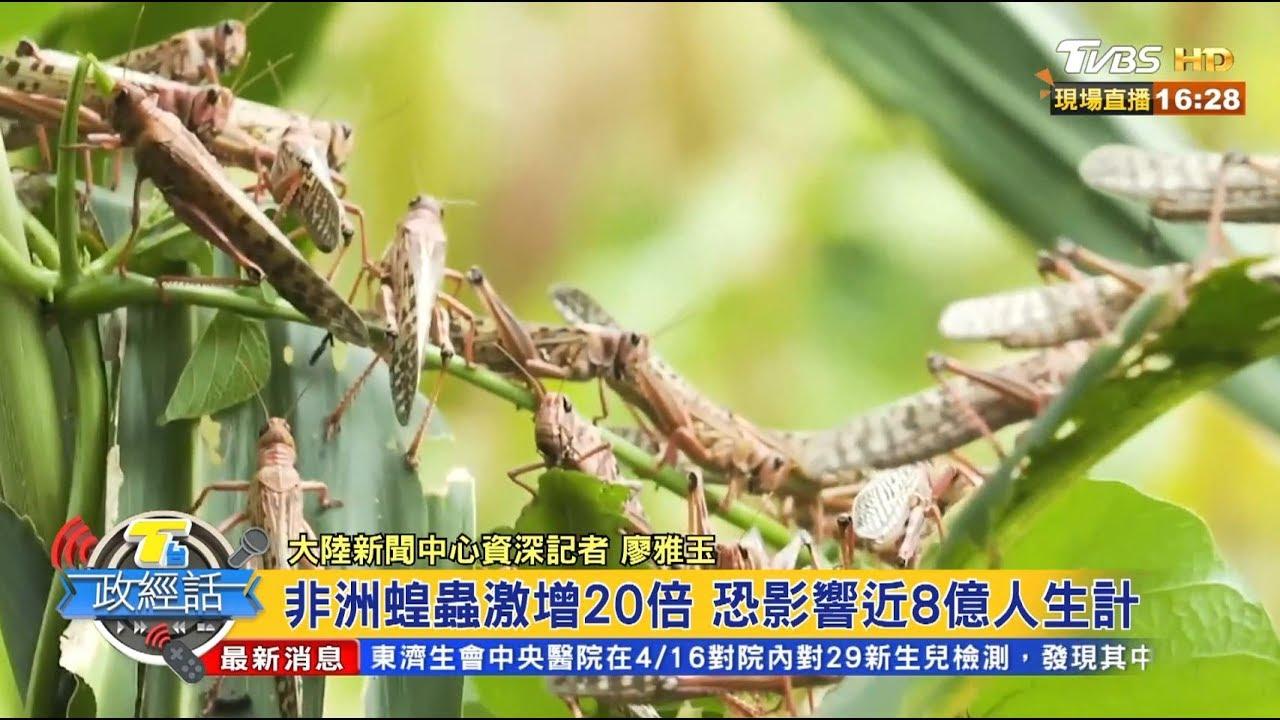 非洲蝗蟲激增20倍 恐影響近8億人生計 T臺政經話 20200422 (3/7) - YouTube
