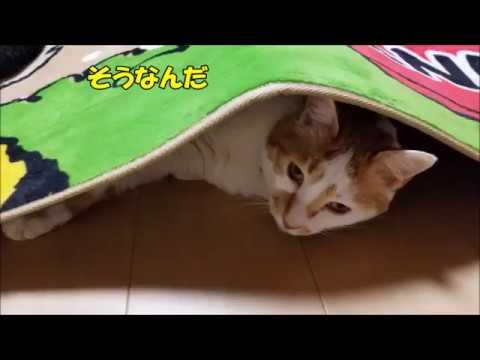【おもしろ猫】ゆずちゃん何してるの?床暖房で温まってるにゃFloor heating