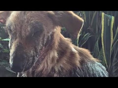 Cachorro Pede Comida E Todos O Chamam De Feio Até Que Sua Vida Muda...
