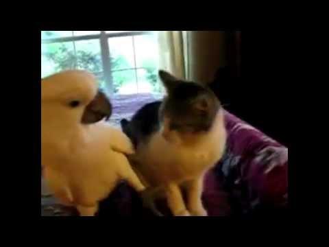 Ох уж эти смешные коты