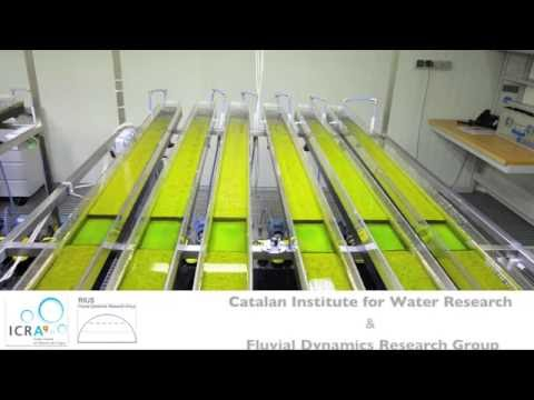 Experiment: Biofilm effects on river-bed erosion