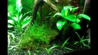 Freshwater Aquarium Led Lighting Vs Fluorescent Part 2