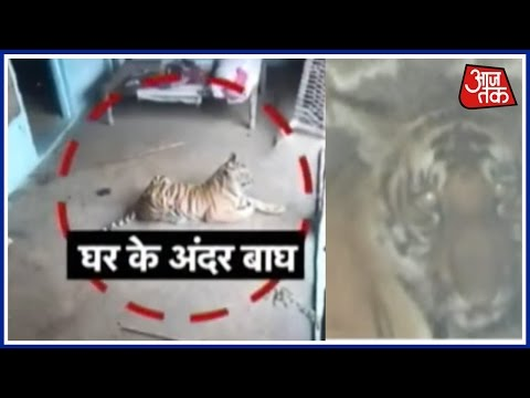 Tiger Invades Uttarakhand Home, Kicks Out The Frightened Family