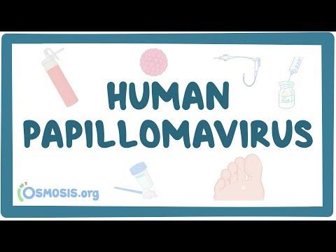 Human papillomavirus or HPV