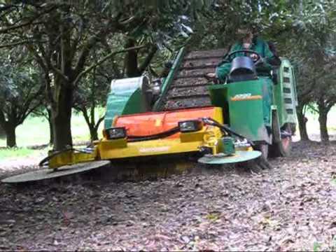 Monchiero In Australian Macadamia Orchard.wmv