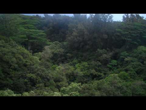 Zipline over gorge (trimmed).MP4
