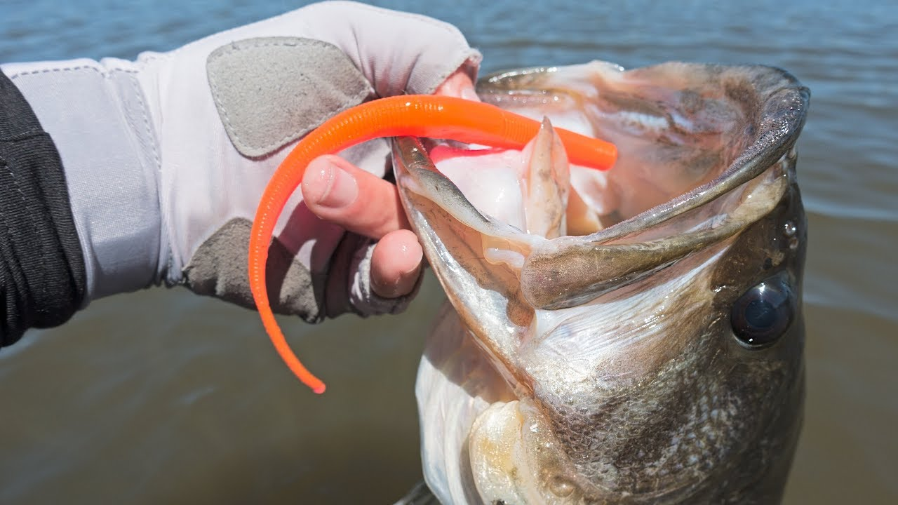 fishing-this-crazy-cheeto-worm-actually-works