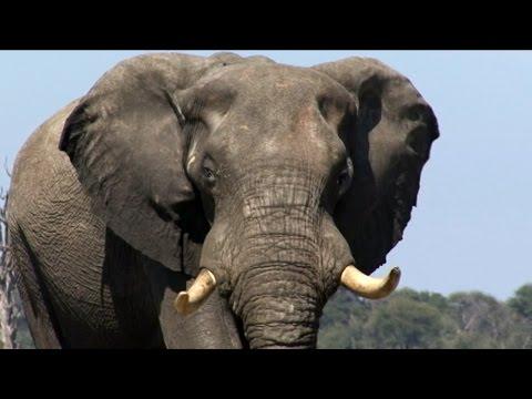 A Southern Africa Adventure - Travelogue PART 2 - ZIMBABWE - Vic Falls & Davisons Camp