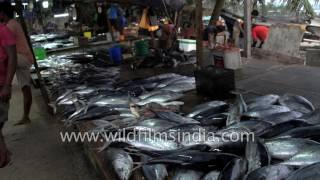 Fish and prawn market in Sri Lanka