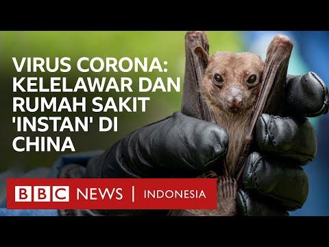 Virus corona: Kelelawar