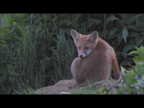 Lišče - Hunter of vivid beauty - Lovcem živé krásy