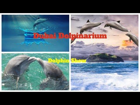 best Dolphin show | Dubai Dolphins | Dolphinarium in Dubai