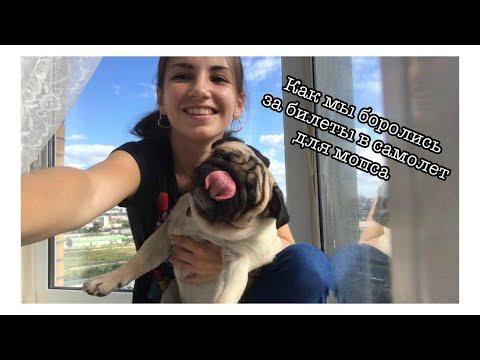 Как купить билет собаке на самолёт ?