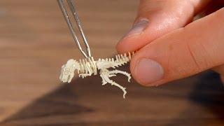 Tinysaurs Diy Miniature Models