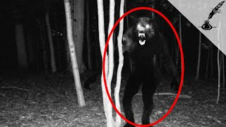 5 Darkest Cases of Real Werewolves in History