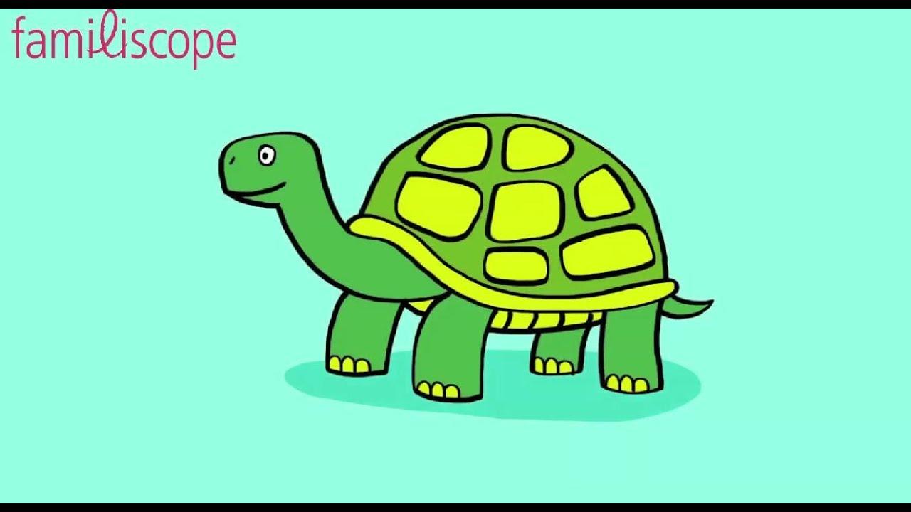 Apprendre dessiner une tortue youtube - Tortue a colorier ...