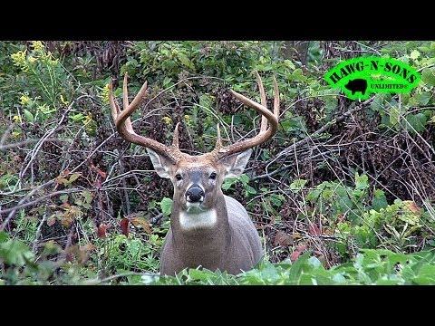 AWESOME Deer HEADSHOTS – Mature Whitetail Buck