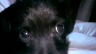 Sweet Dogs Wiki 2