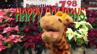 Happy Holidays from Giraffe!!