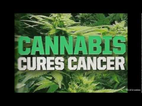 Buy Best Cannabinoid 2012