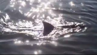 Is it a shark? No, it