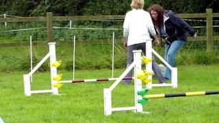 Cerney Wick Dog Show - Wrigley Agility And Tricks