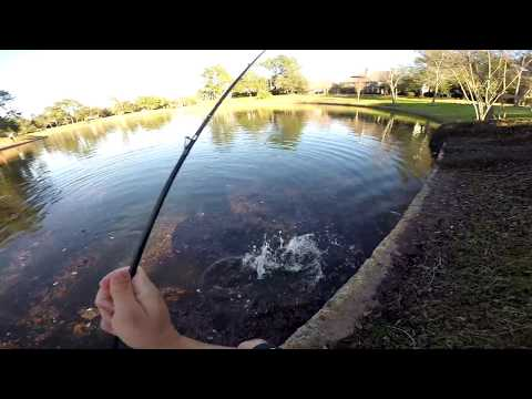 Fishing In Houston, Texas
