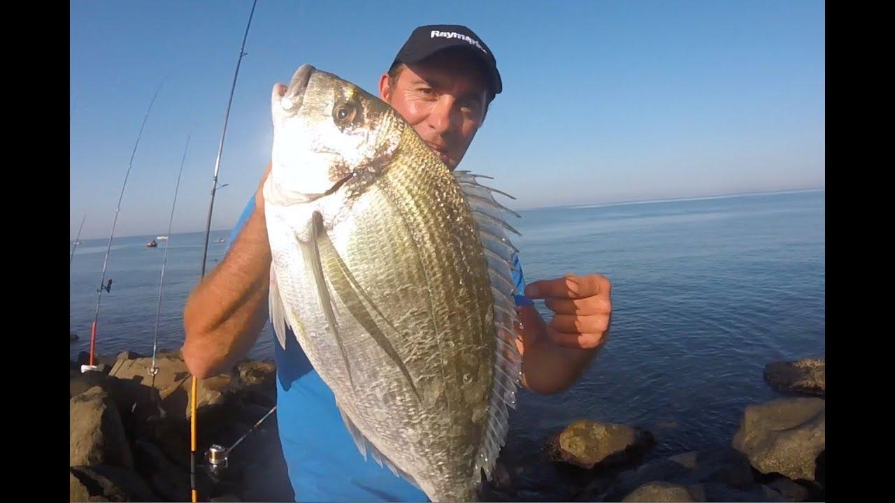Pescare ORATE Col Granchio -INNESCHI E TERMINALI- / Pescar