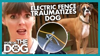 Are Electric Fences Safe for Dogs? | It's Me or the Dog