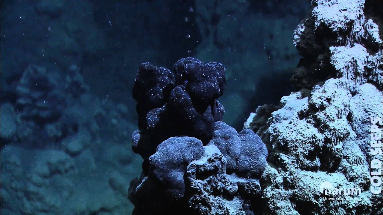 Cold Seeps In The Deep Sea Youtube