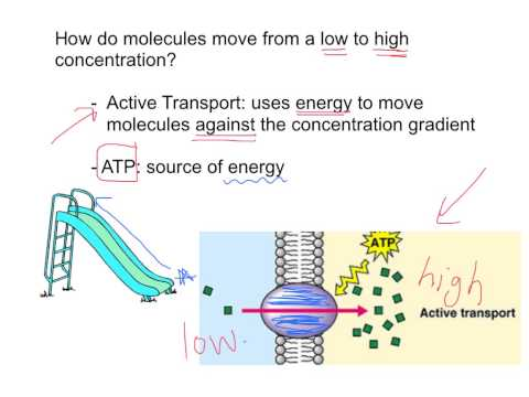 Facilitated Diffusion & Active Transport