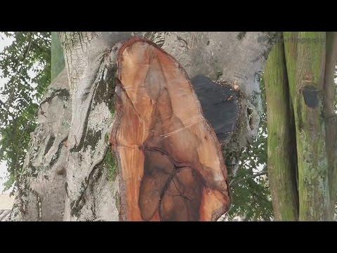 Tras el temblor, la virgen se apareció en un pueblo de Colombia