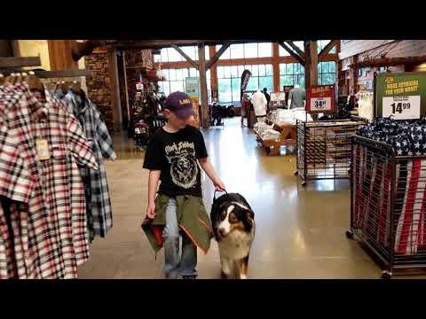 1yo Australian Shepherd (Bandit) 2-week Transformation | Best Arkansas Dog Training