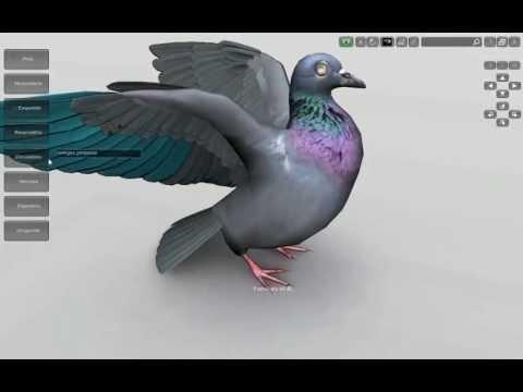 3D Bird Anatomy Software - Beta version 0.1