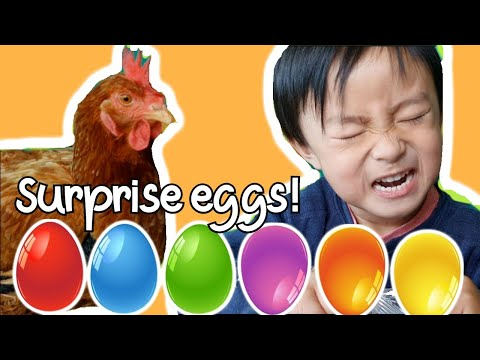 Surprise Eggs Opening with our Chicken!