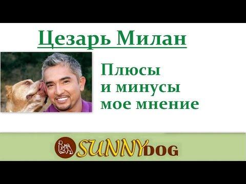 Переводчик с собачьего c Цезарем Миланом 7 сезон 15.avi